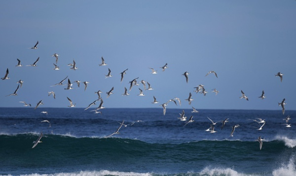 Above the waves by ColleenA