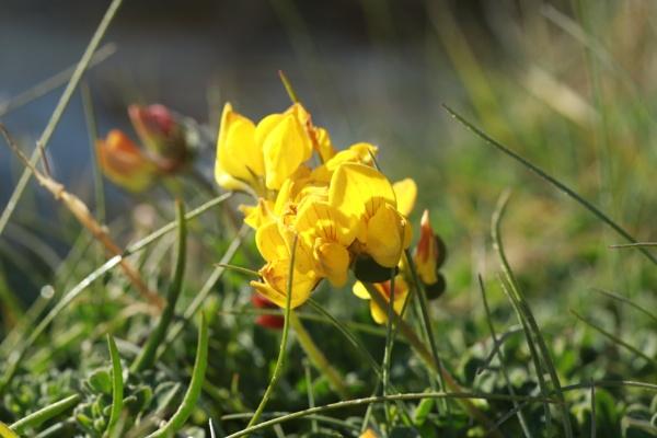Pretty in yellow by loobylyn