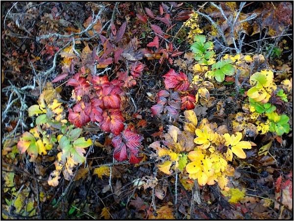 fall-leaves still by FabioKeiner