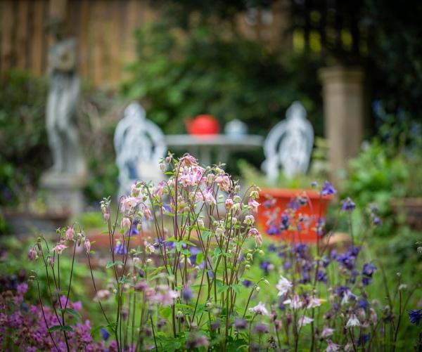 Aquilegia garden by Danny1970