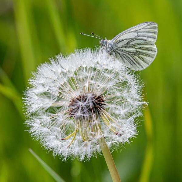 Butterfly clock by Stevetheroofer