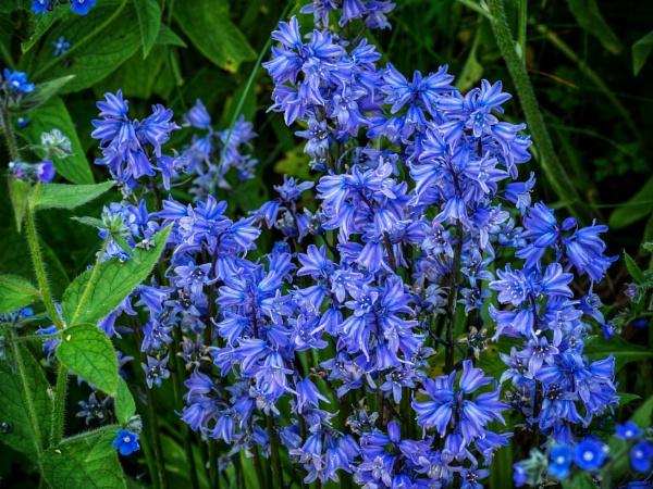 Bluebells by victorburnside