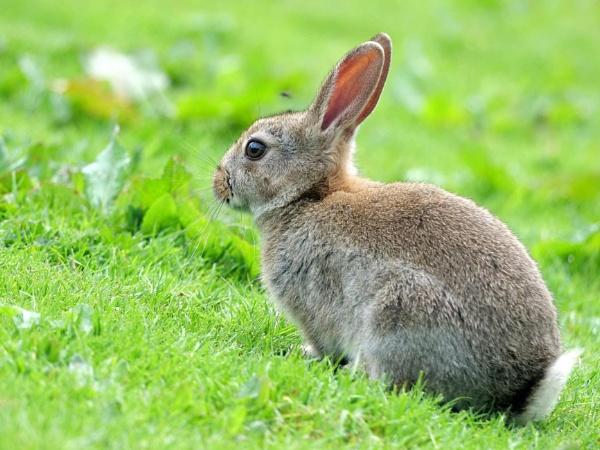 Rabbit by DerekHollis
