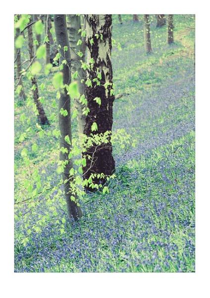 Pastel Dream by gerainte1
