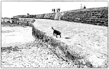 Black Dog On Cobb (Version 2)