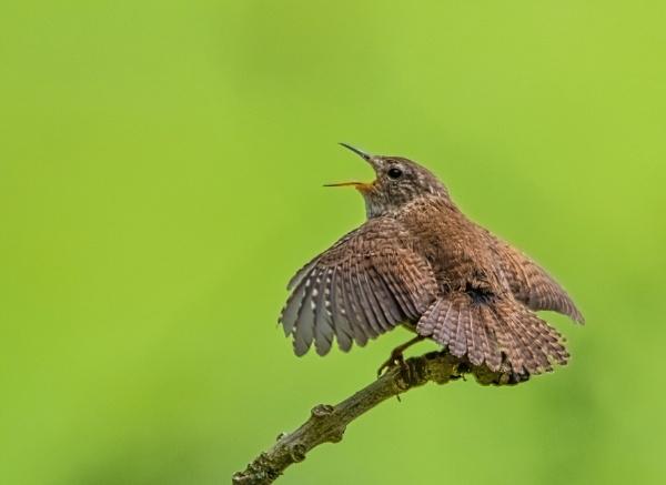 Sing,Sing,Sing by yorkshirepete