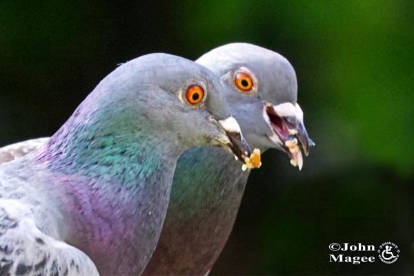 Pecking Order by Jmag60
