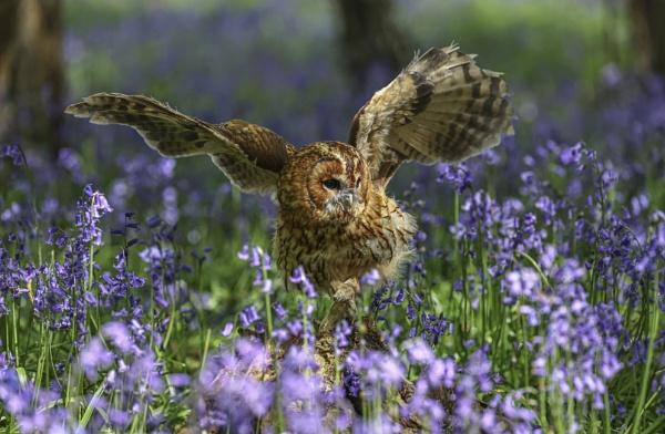 Landing in the Bluebells by AnnetteK