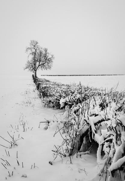 Snow Light by Acancarter