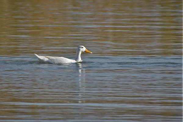 On Golden Pond by KingArthur