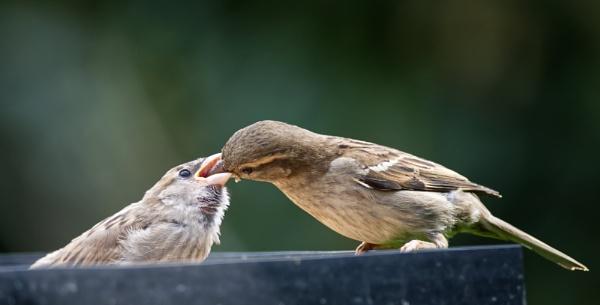 Feeding Time by roge21