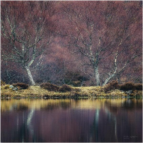 Birch Reflections by Mstphoto