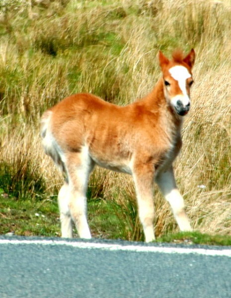 perky foal by mountains