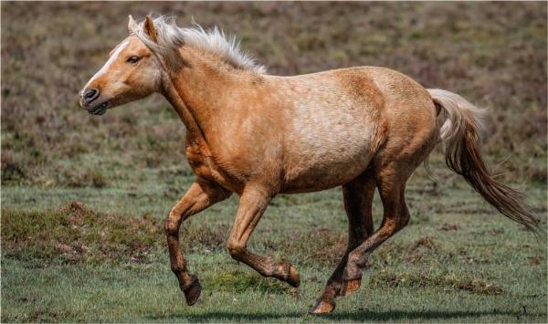 Galloping Pony by mjparmy