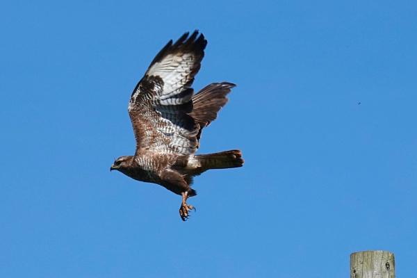 Take-off. by cheddar-caveman