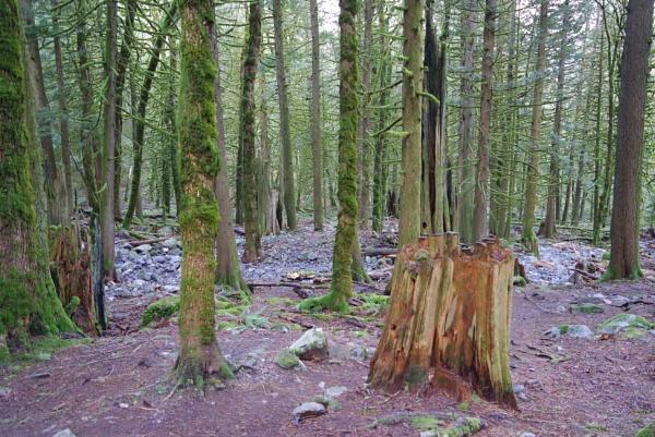 Rainforest Hike by Friendlyguy