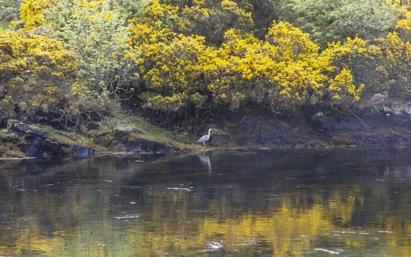 Heron and Broom by Irishkate