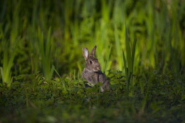 just a rabbit by bigjim147