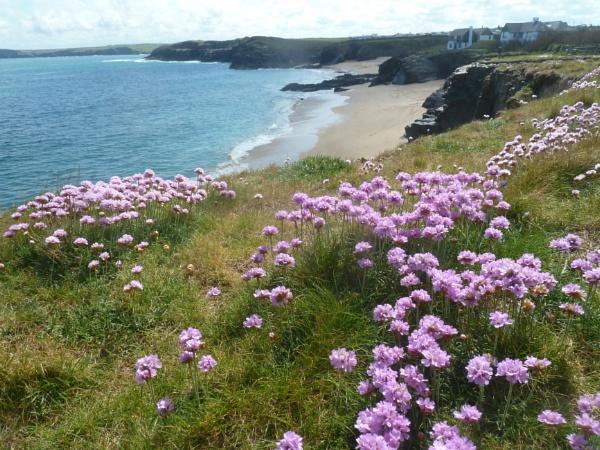 Coastal Flowers - 5 - Mother Ivy\'s Bay  by JuBarney