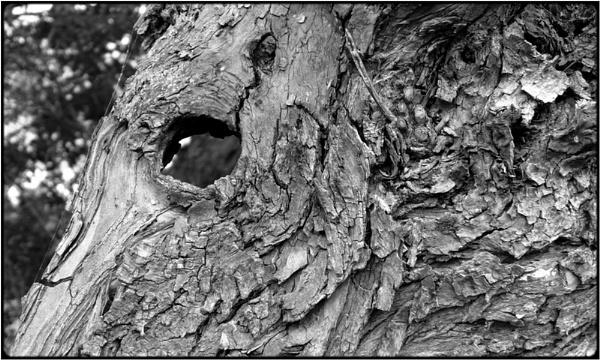 the eye by FabioKeiner
