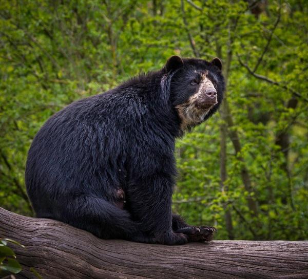 Mummy Bear by TheShaker