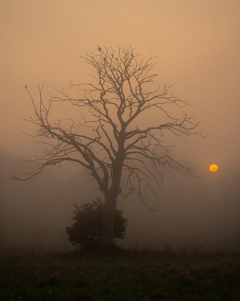 Misty morning by flowerpower59