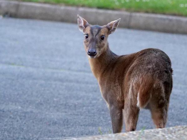 I see you, deer. by DerekHollis