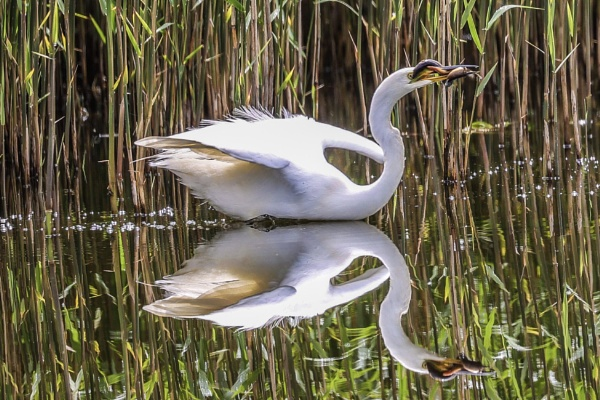 The reflection. by Lencollard