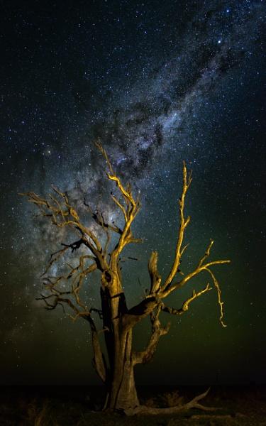 Dead Tree Under the Milky Way, Cookardinia by BobinAus
