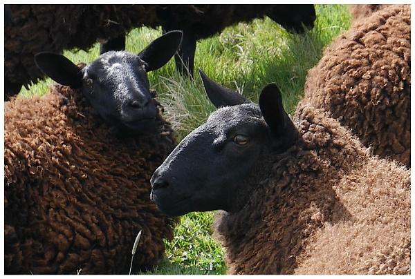 Brown woolly Jumpers by hsreid
