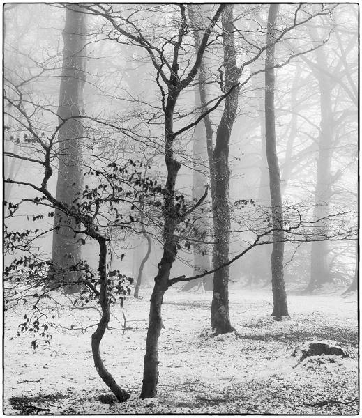 January Mist by MalcolmM