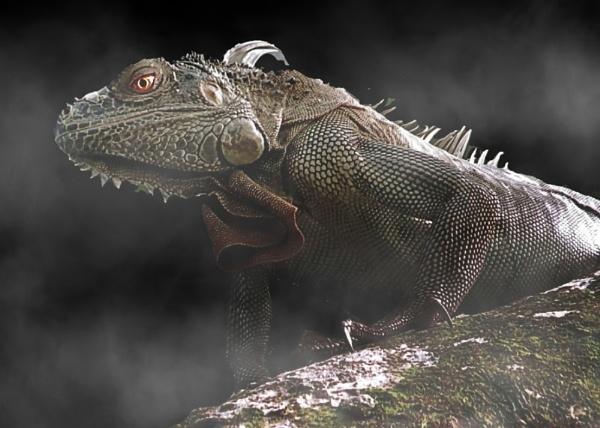 Enter the Dragon by IamDora