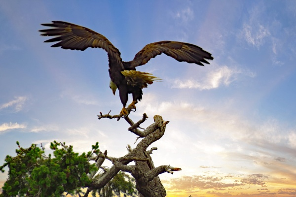 Wing Span. by judee