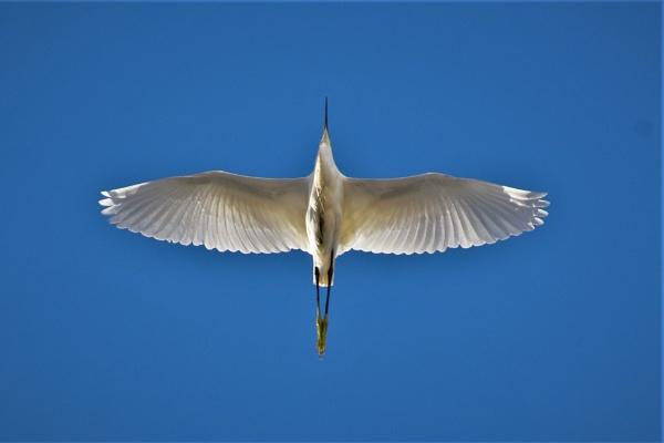 Overhead Beauty by KingArthur