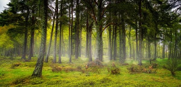 Mystical Wood by douglasR
