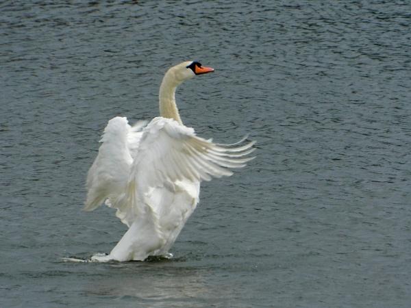 Wings by SUE118