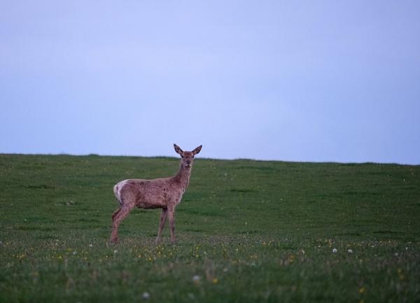 Hello Deer by JonnyWilliams