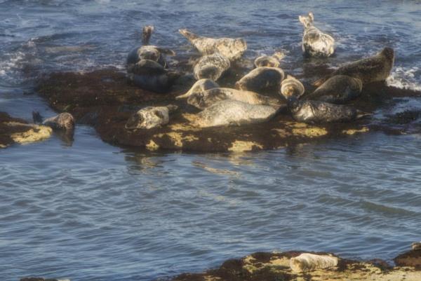 Seals by Alan_Baseley