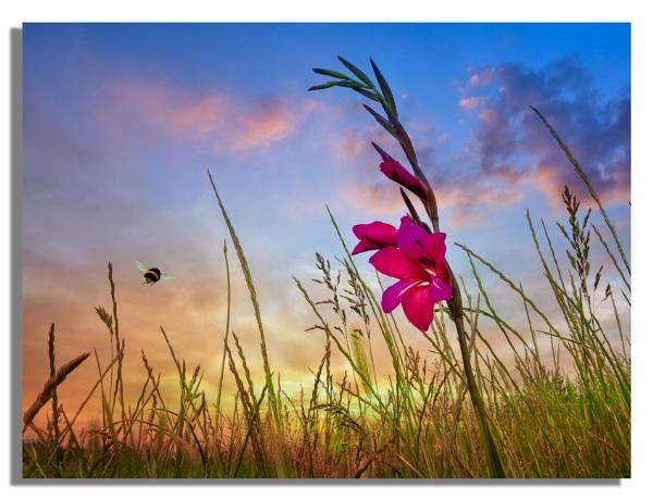 Lone Flower by carper123