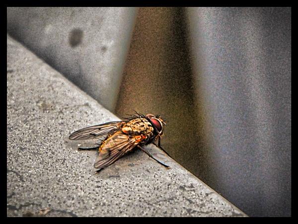FLY (2) by kojack