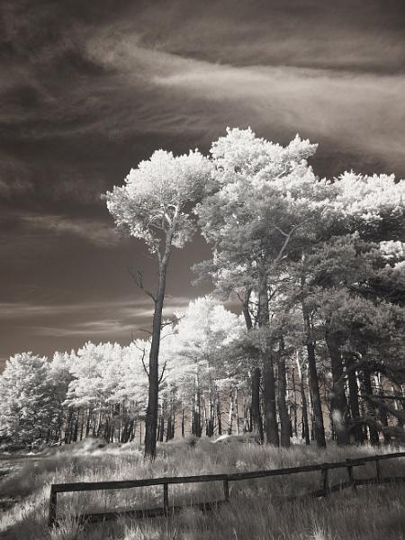 Woodland by milepost46