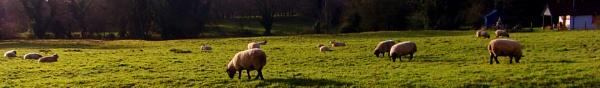 SHEEP by SOUL7