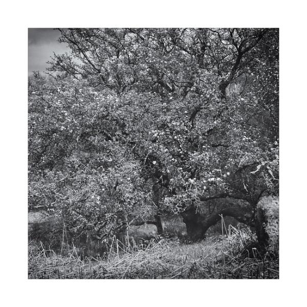 Wild Blossom by gerainte1