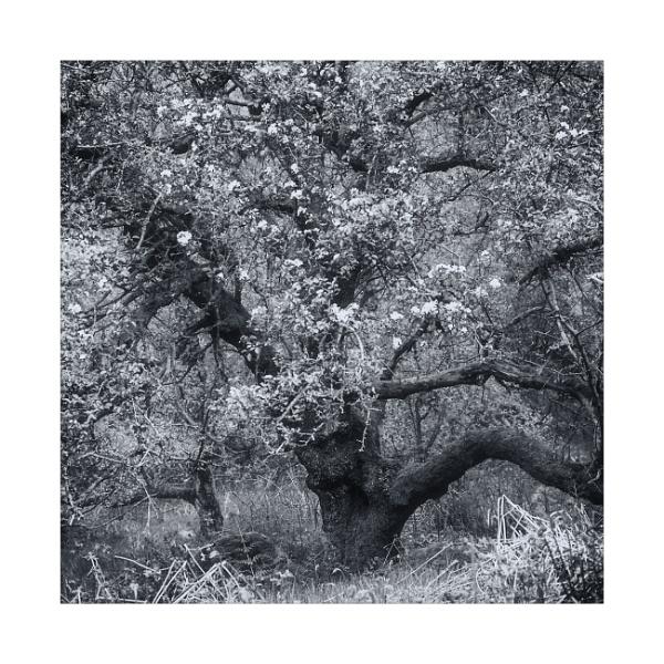 Wild Blossom 2 by gerainte1