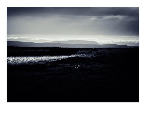 Moor Grass by gerainte1