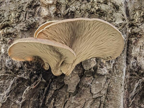 Tree Fungi by Bore07TM