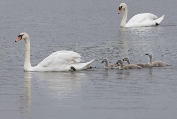 Follow Mum by Janetdinah