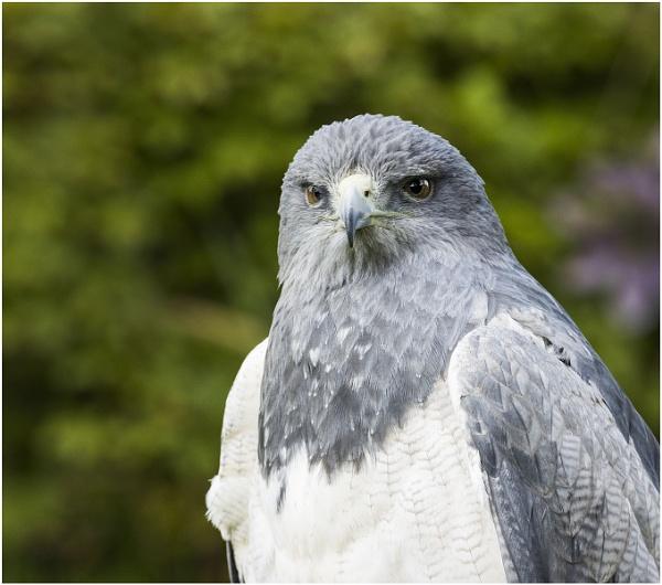 International Birds of Prey Centre - Newent Glos by VincentChristopher