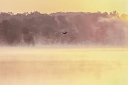 Misty Morning Fly