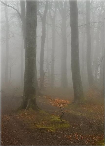November Mist by MalcolmM